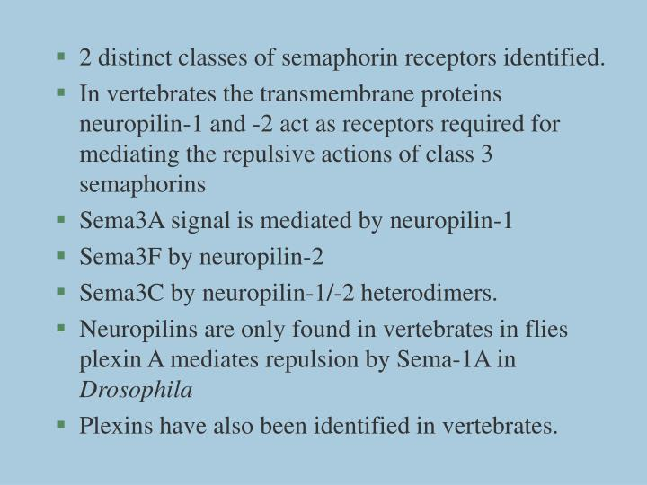 2 distinct classes of semaphorin receptors identified.