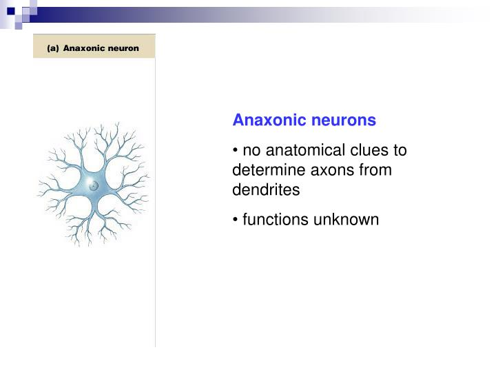 Anaxonic neurons