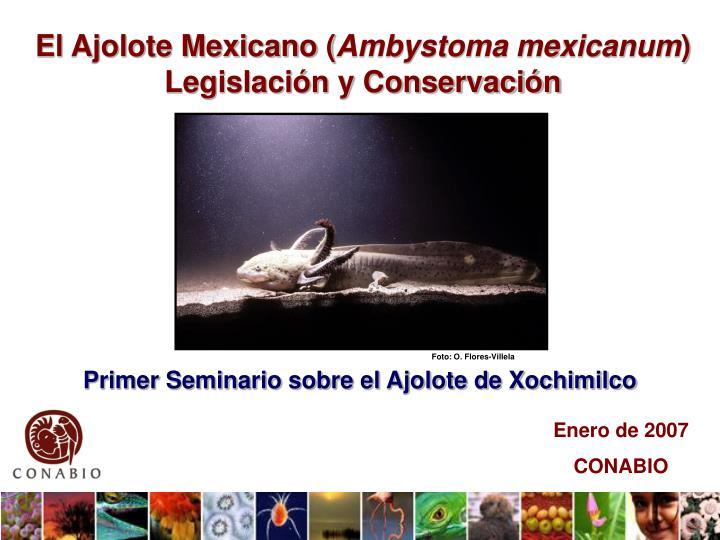 El Ajolote Mexicano (