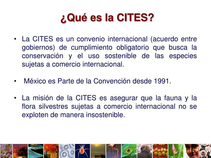 ¿Qué es la CITES?