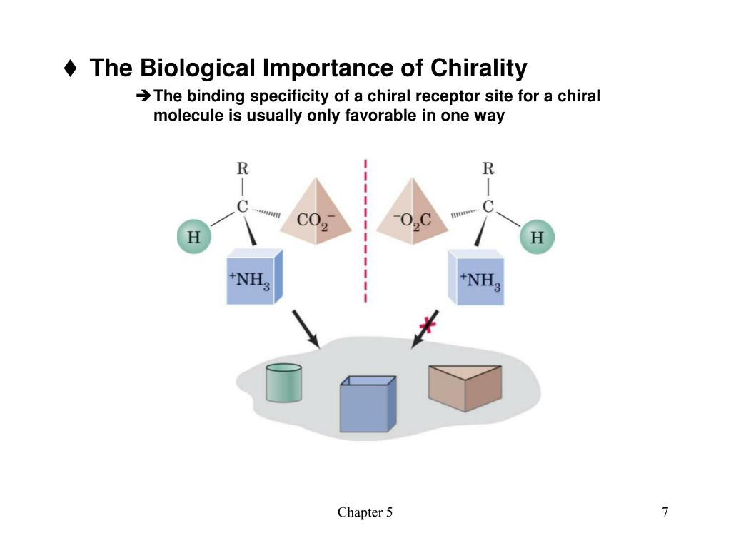 The Biological Importance of Chirality
