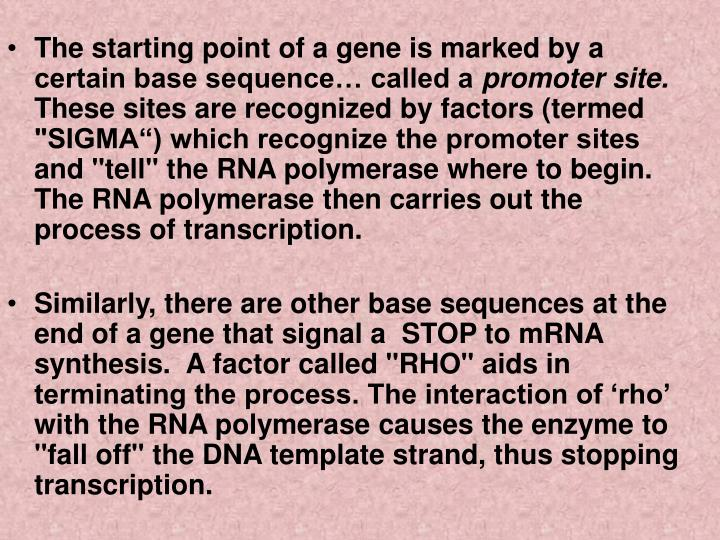 The starting point of a gene is marked by a certain base sequence… called a