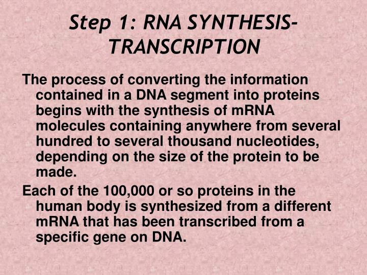 Step 1: RNA SYNTHESIS- TRANSCRIPTION
