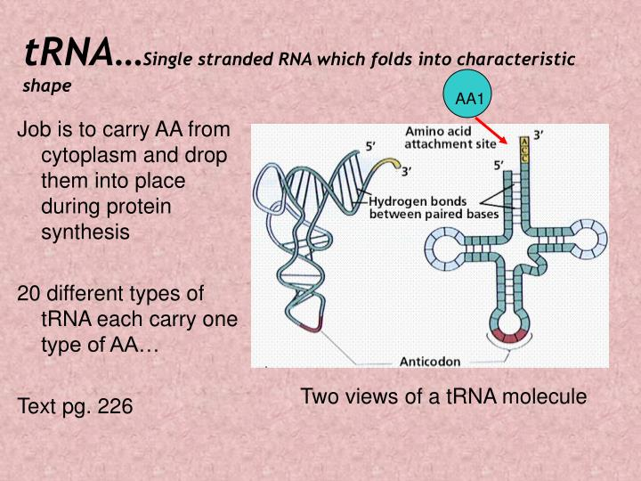 tRNA…