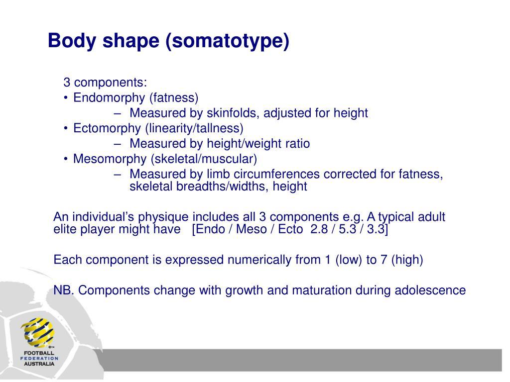 Body shape (somatotype)