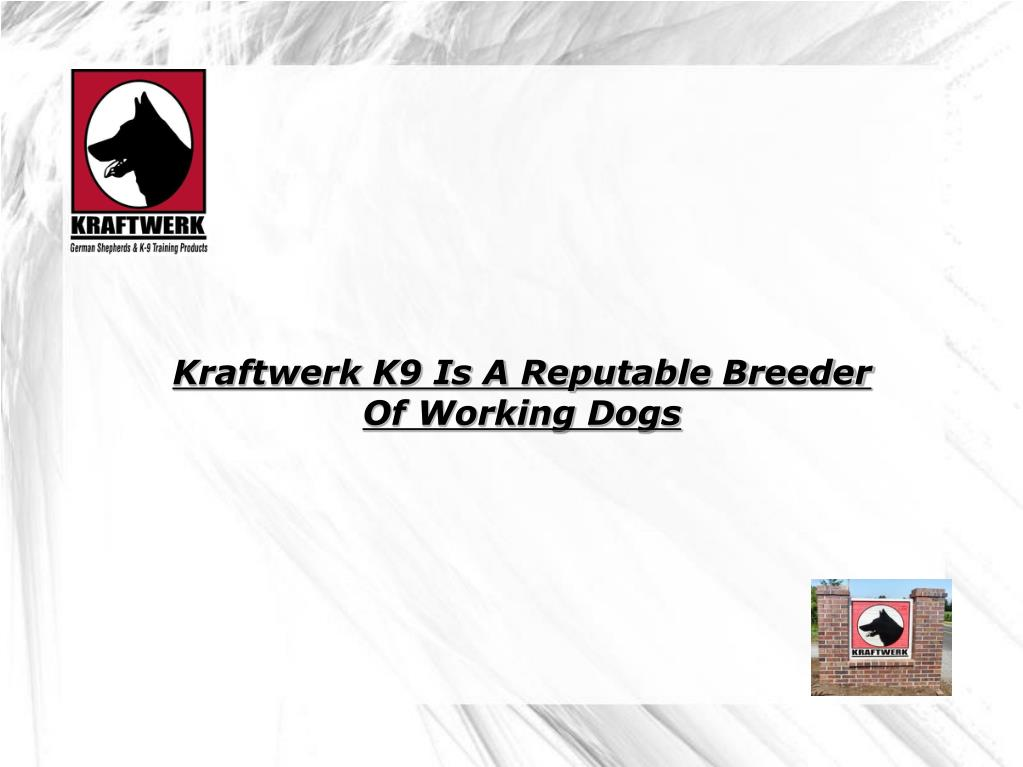 Kraftwerk K9 Is A Reputable Breeder Of Working Dogs