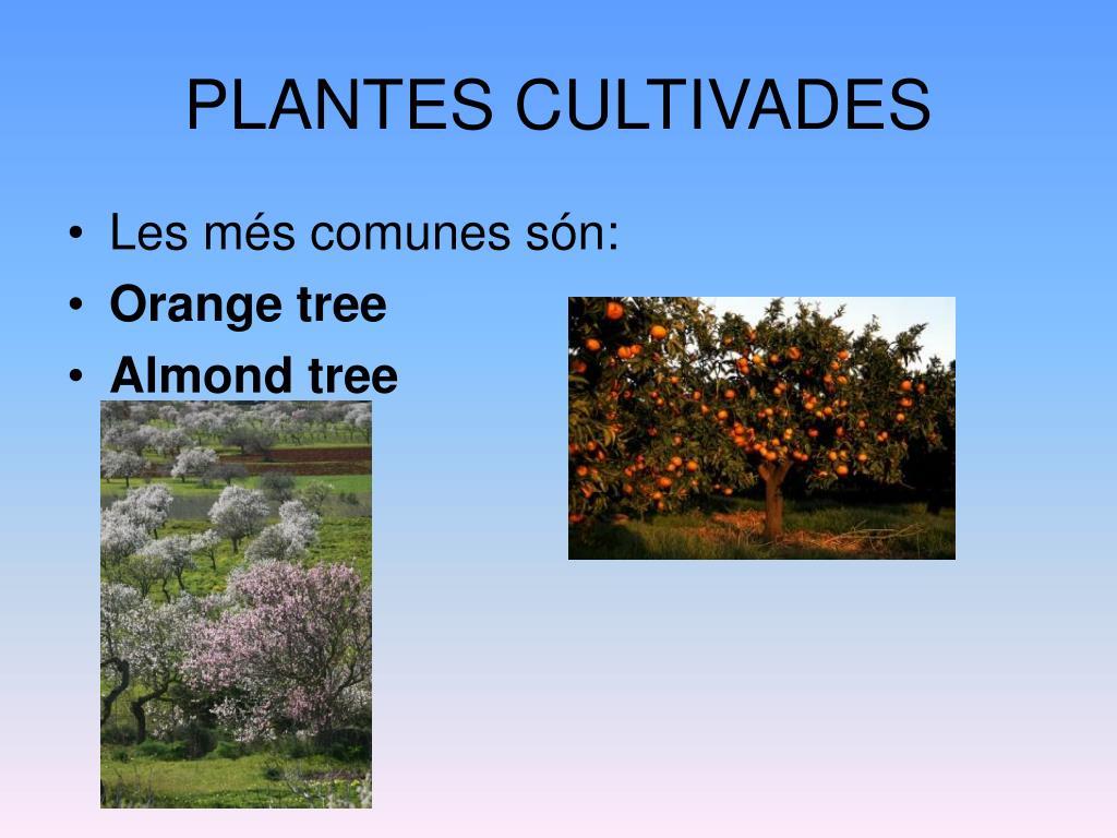 PLANTES CULTIVADES