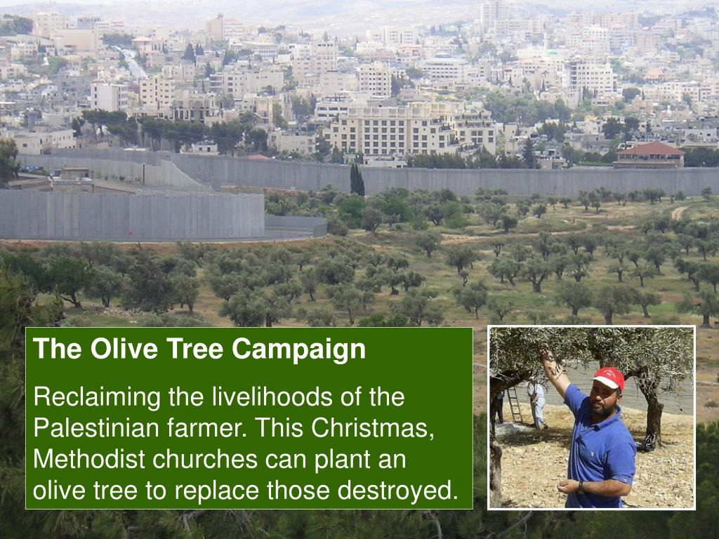 The Olive Tree Campaign