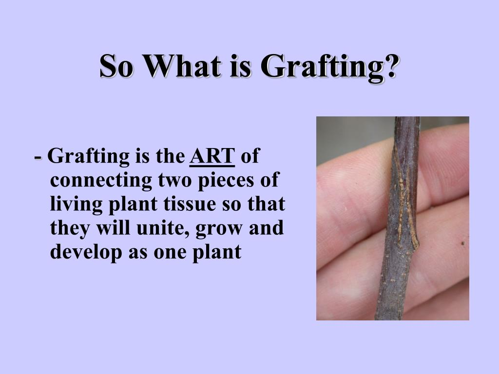 So What is Grafting?