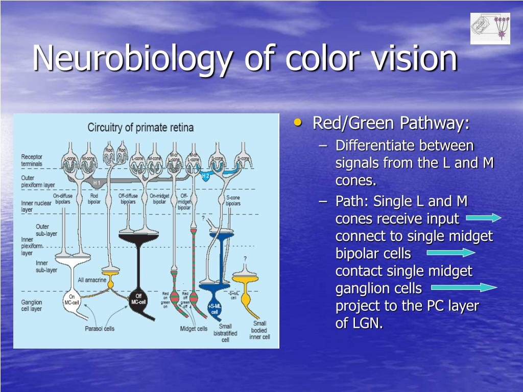 Neurobiology of color vision