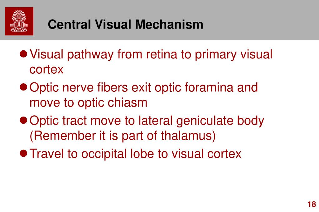 Central Visual Mechanism