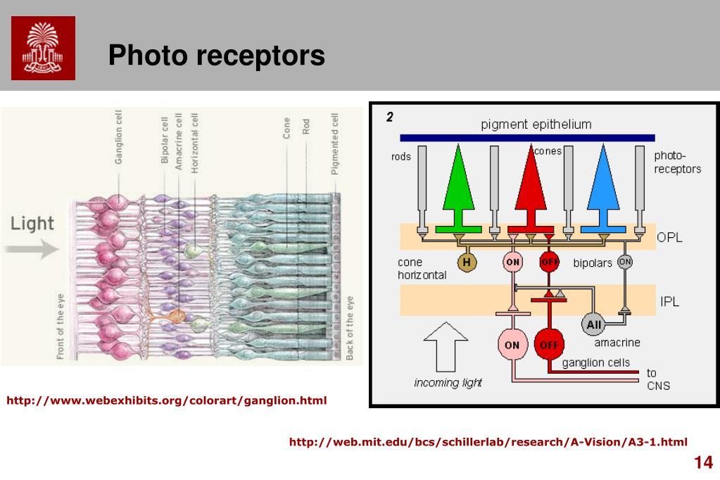 Photo receptors