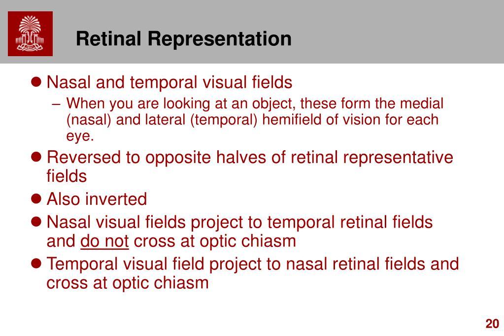 Retinal Representation