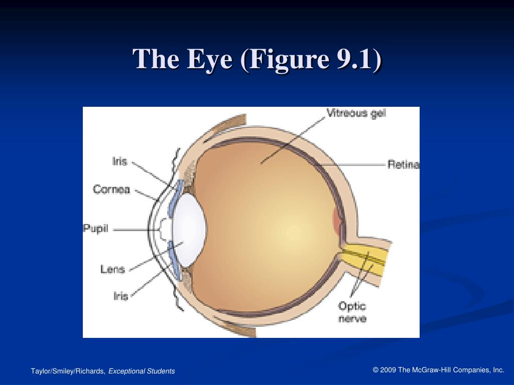 The Eye (Figure 9.1)