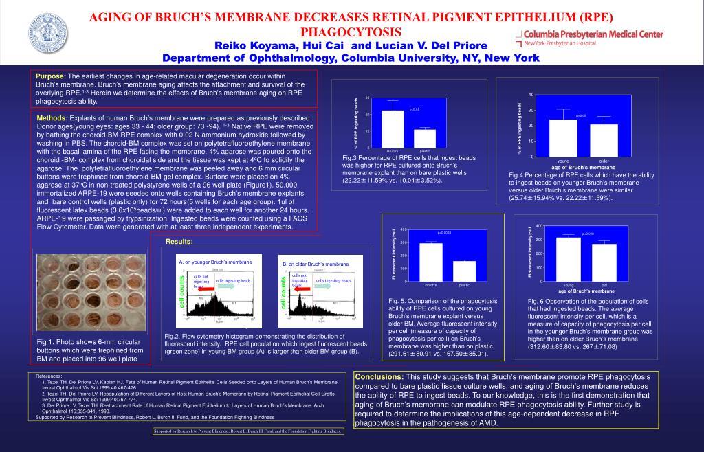 AGING OF BRUCH'S MEMBRANE DECREASES RETINAL PIGMENT EPITHELIUM (RPE) PHAGOCYTOSIS