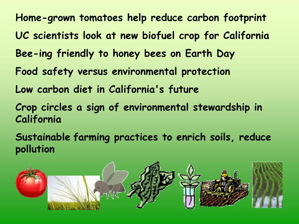 Home-grown tomatoes help reduce carbon footprint
