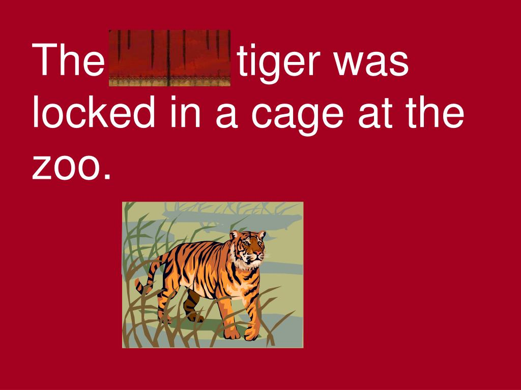 The fierce tiger was locked in a cage at the zoo.