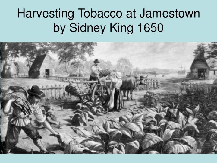 Harvesting Tobacco at Jamestown