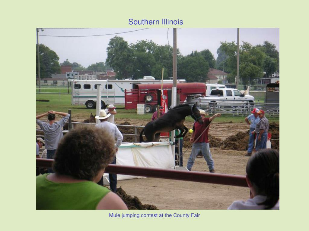 Mule jumping contest at the County Fair