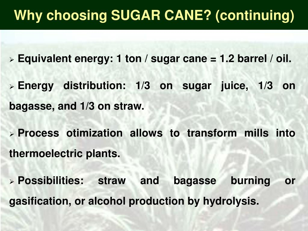 Why choosing SUGAR CANE? (continuing)