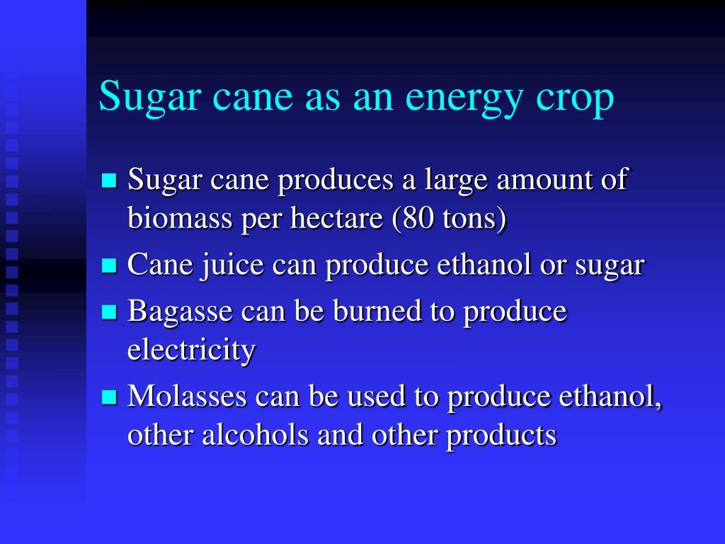 Sugar cane as an energy crop