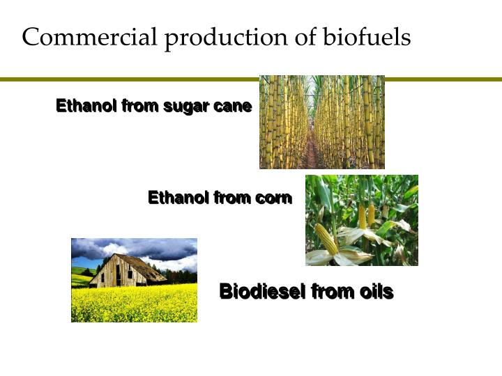 Commercial production of biofuels