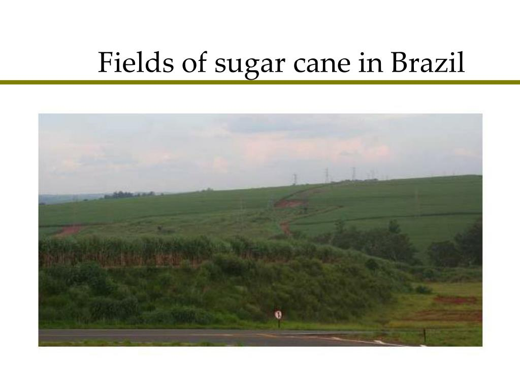Fields of sugar cane in Brazil