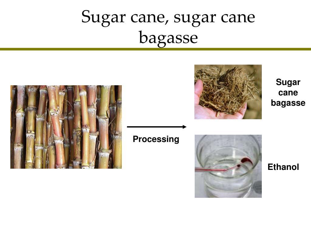 Sugar cane, sugar cane bagasse