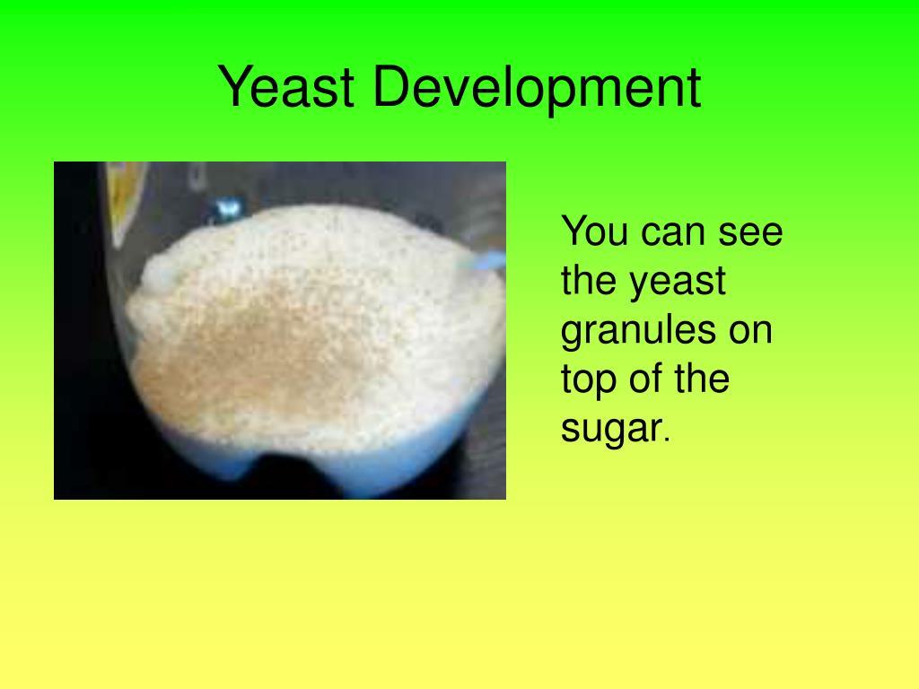 Yeast Development