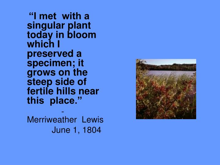 """I met  with a  singular plant  today in bloom which I preserved a specimen; it  grows on the  ste..."