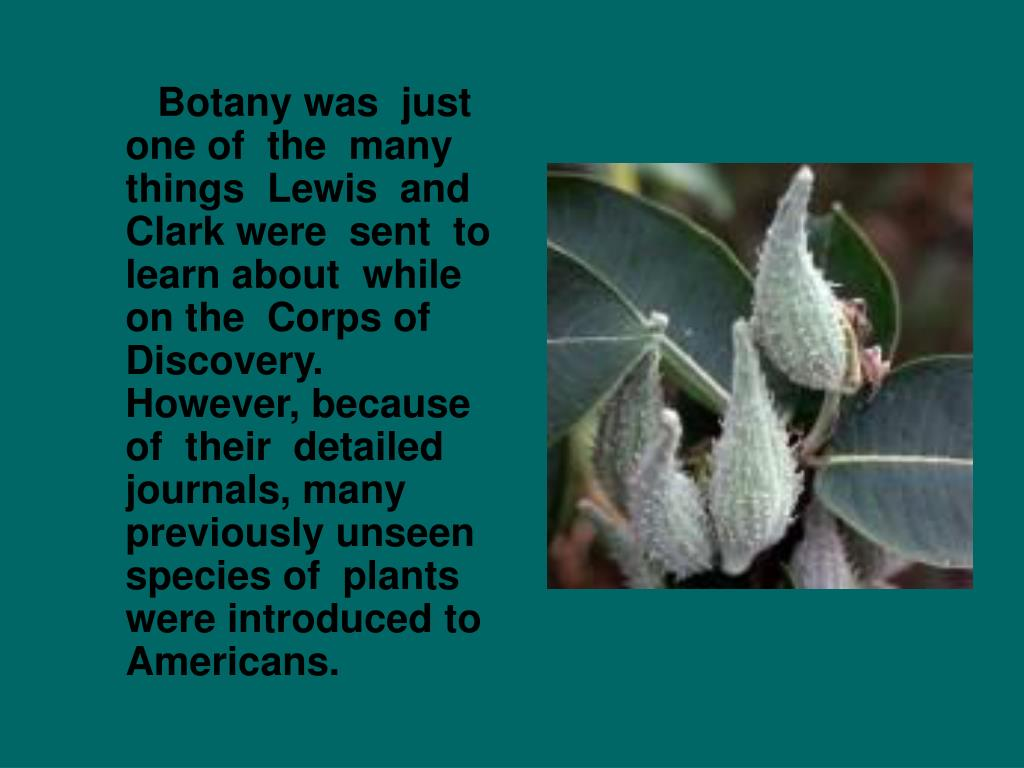 Botany was  just one of  the  many things  Lewis  and  Clark were  sent  to learn about  while on the  Corps of  Discovery.  However, because  of  their  detailed  journals, many previously unseen species of  plants were introduced to Americans.