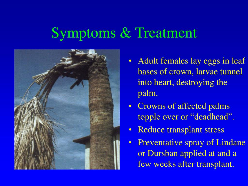 Symptoms & Treatment