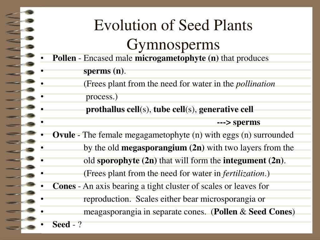 Evolution of Seed Plants