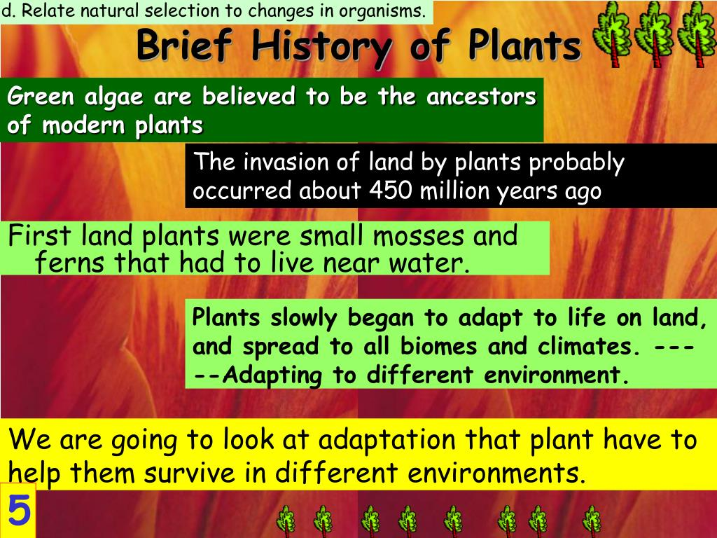 d. Relate natural selection to changes in organisms.