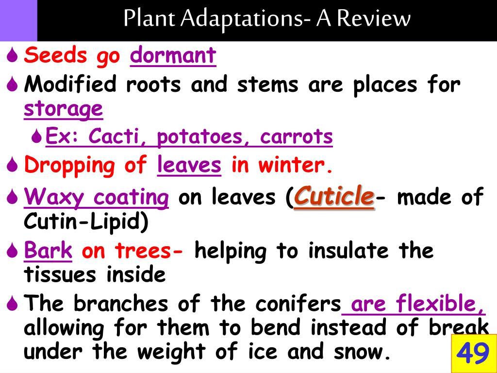 Plant Adaptations- A Review