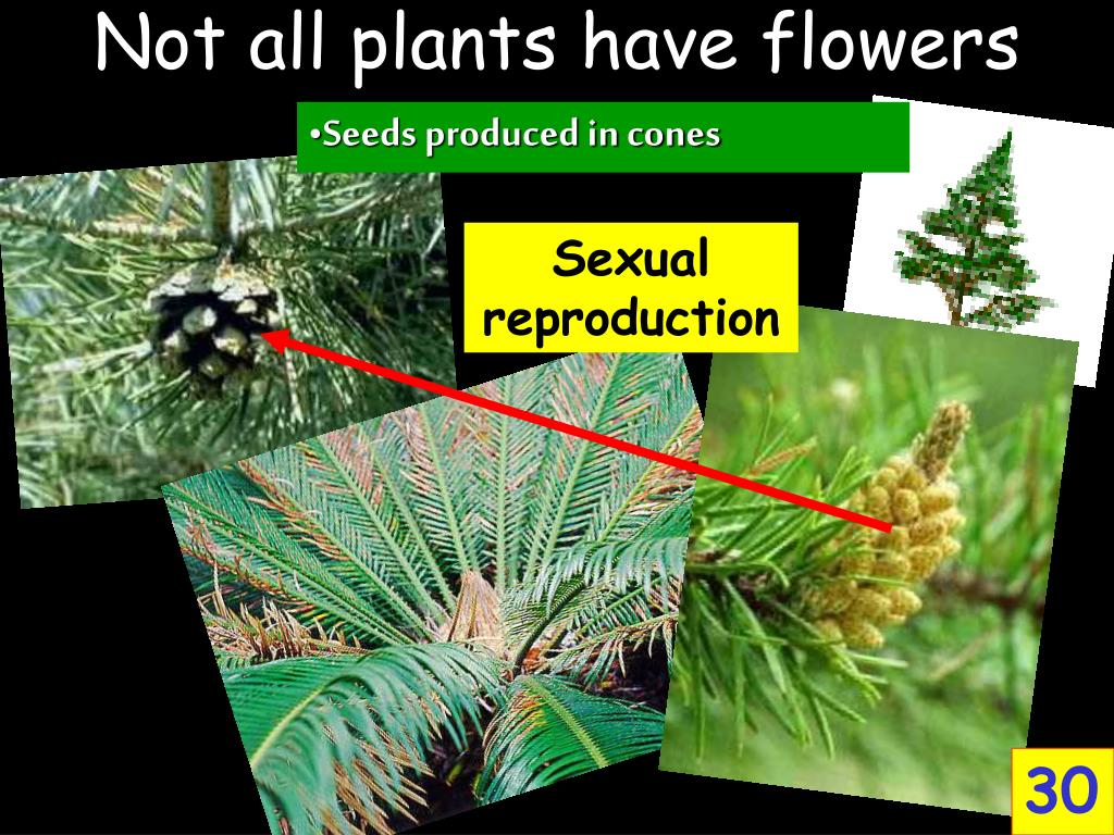 Not all plants have flowers