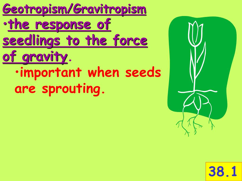 Geotropism/Gravitropism