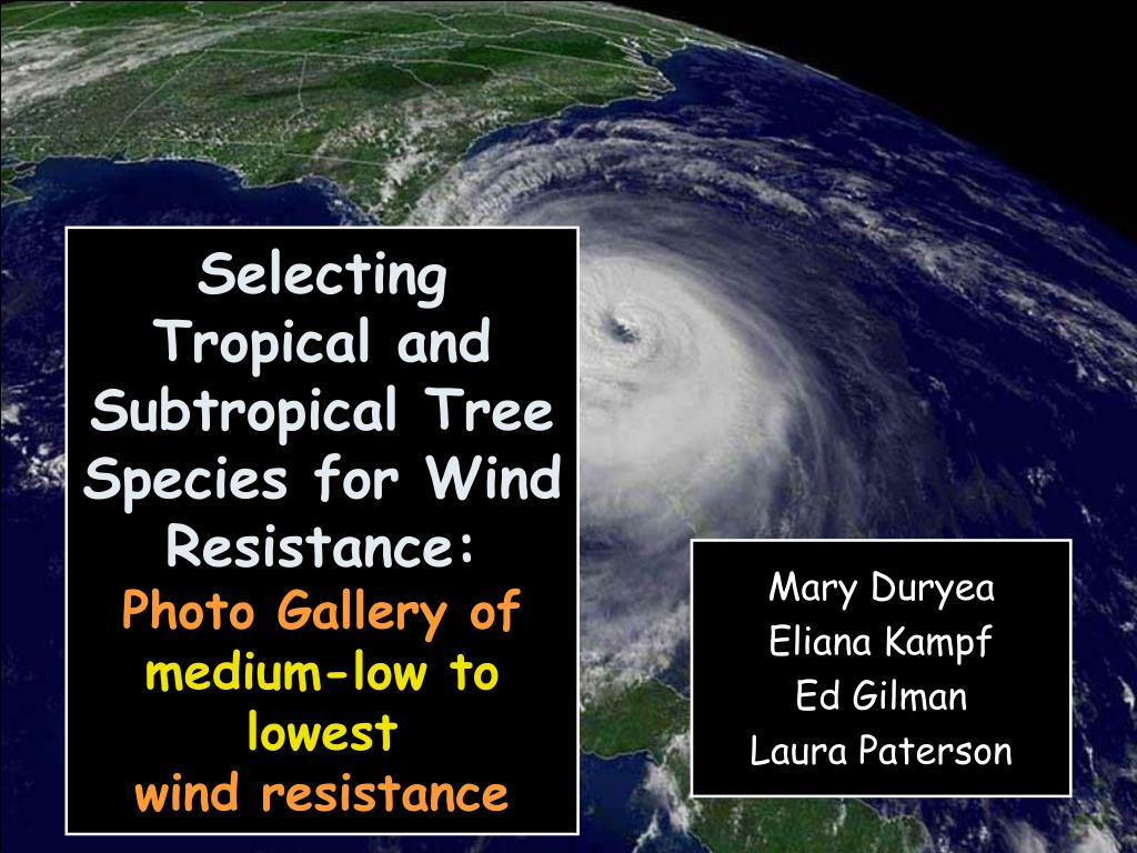 Selecting Tropical and Subtropical Tree Species for Wind Resistance:
