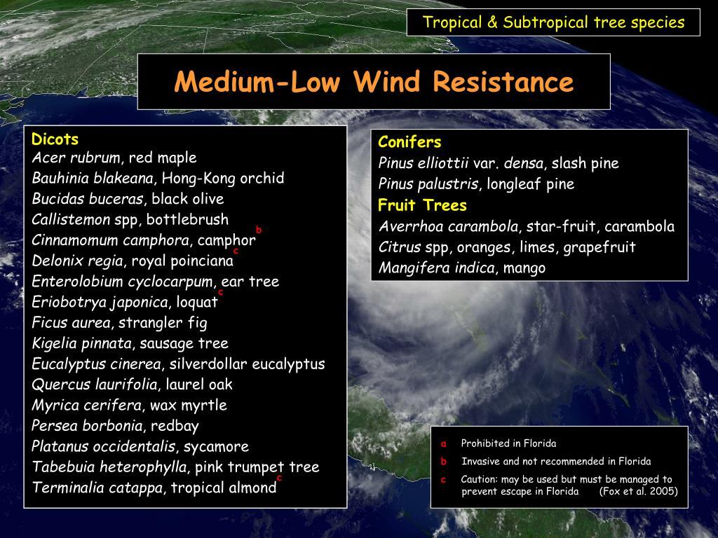 Tropical & Subtropical tree species