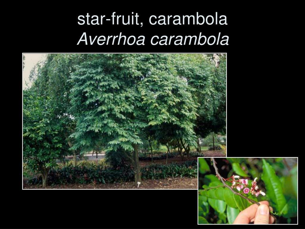 star-fruit, carambola