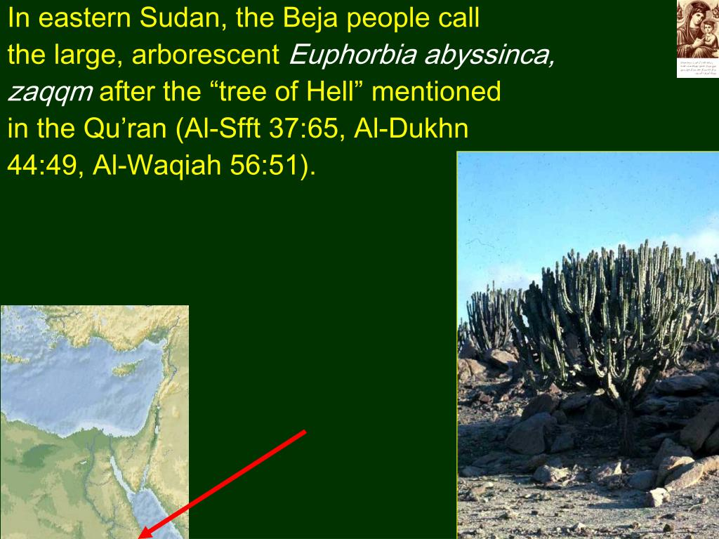 In eastern Sudan, the Beja people call