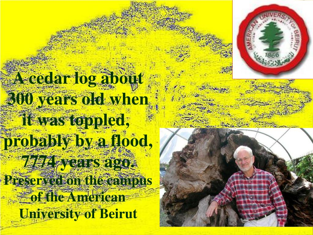 A cedar log about