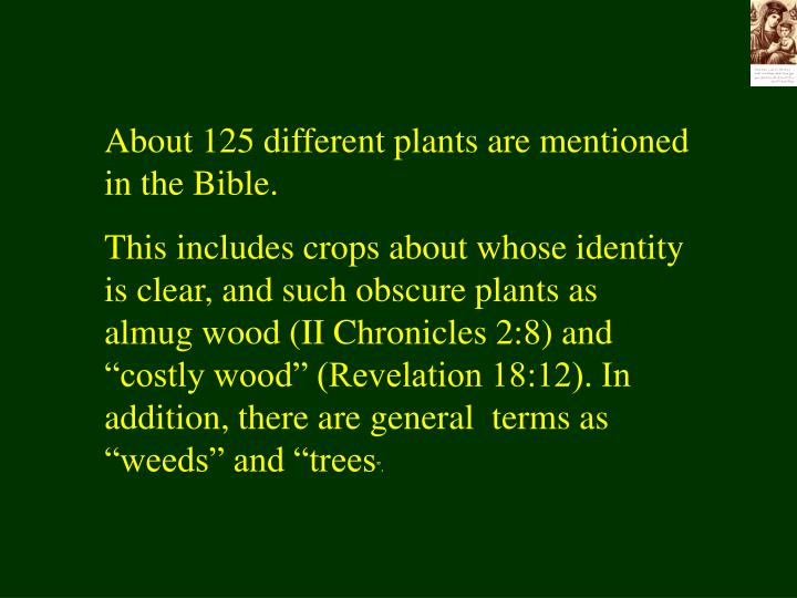 About 125 different plants are mentioned in the Bible.