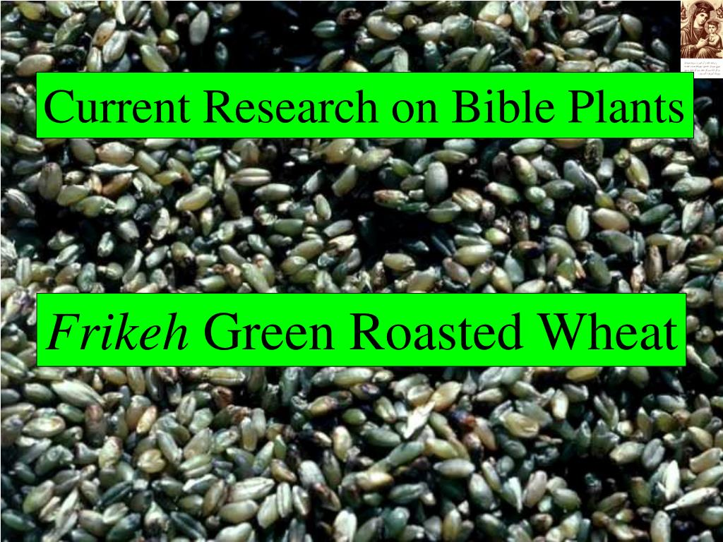 Current Research on Bible Plants