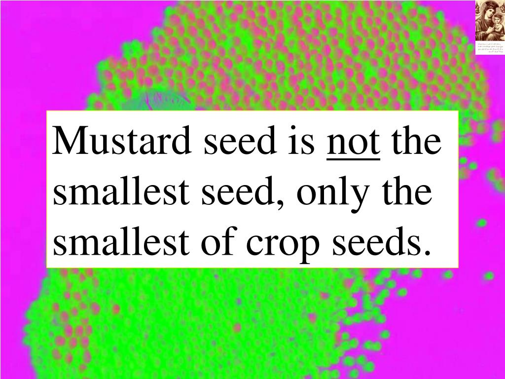 Mustard seed is