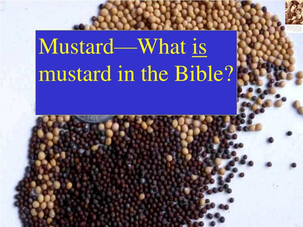 Mustard—What