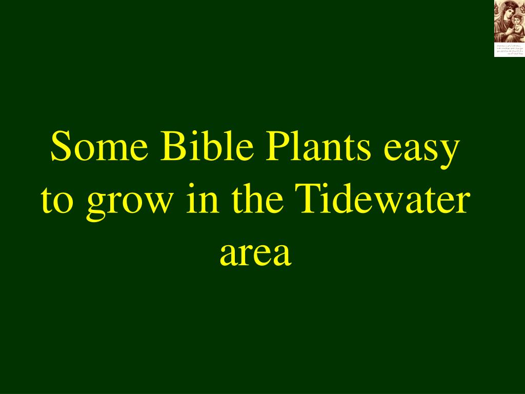 Some Bible Plants easy