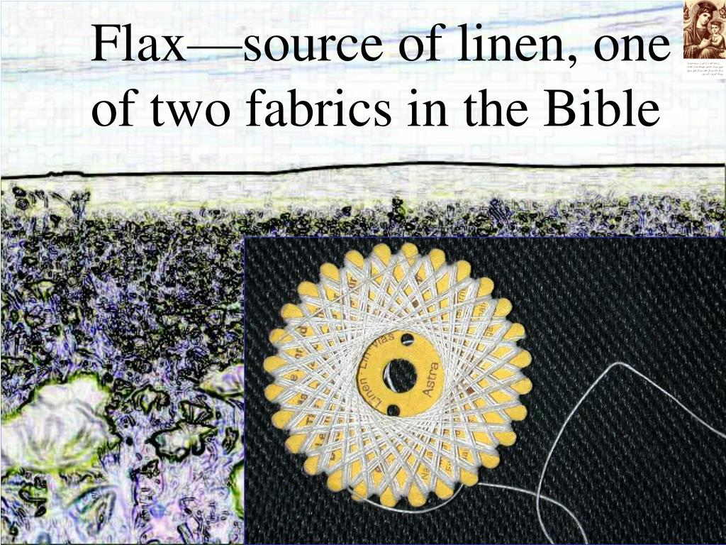 Flax—source of linen, one