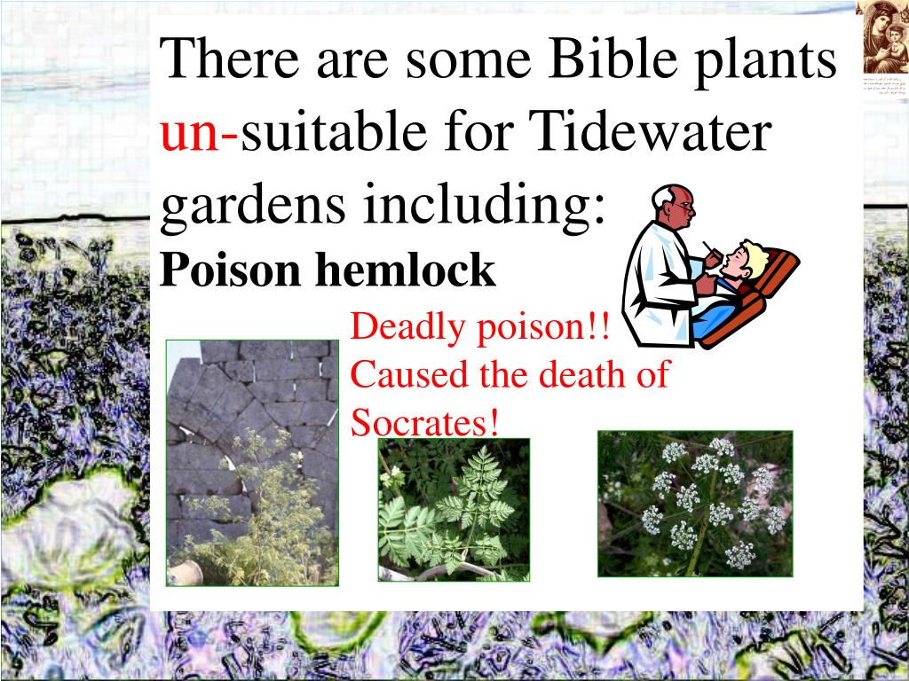 There are some Bible plants