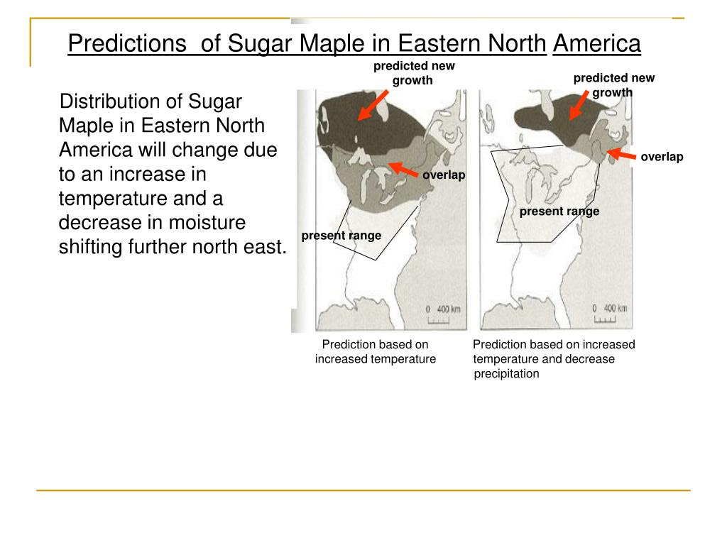 Distribution of Sugar Maple in Eastern North America will change due to an increase in temperature and a decrease in moisture shifting further north east.